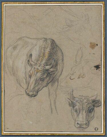 Quatre boeufs, un mouton