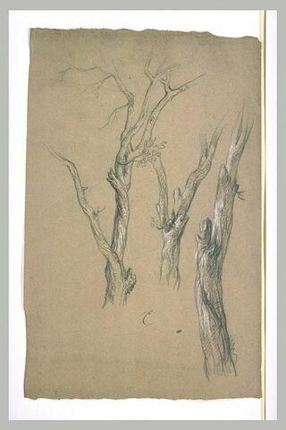 Trois arbres dénudés