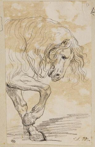 Avant-train d'un cheval