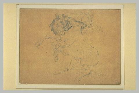 Un lion attaquant un cheval