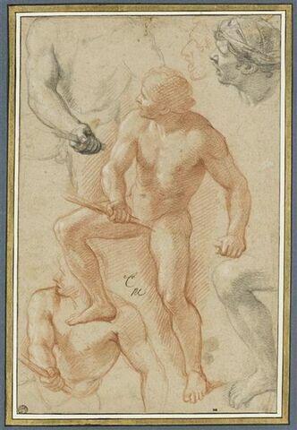 Homme nu, tourné vers la gauche et diverses études