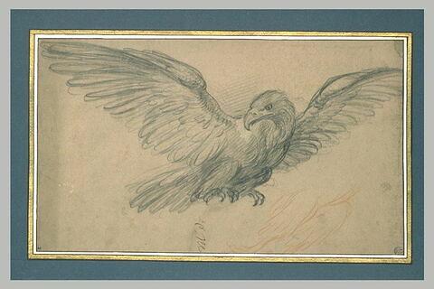 Aigle aux ailes déployées