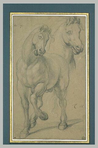 Cheval debout ; tête de cheval