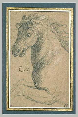 Tête de cheval, tournée vers la gauche