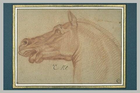 Tête de cheval, tournée à gauche