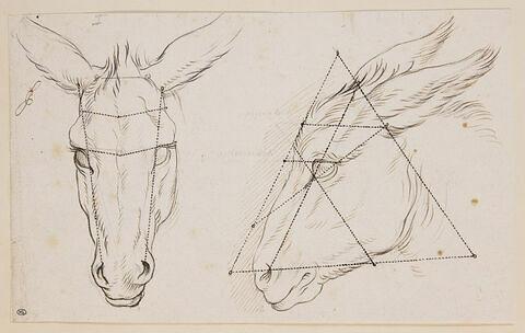 Deux études de tête d'âne