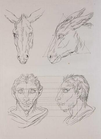 Deux têtes d'âne et deux têtes d'homme en relation avec l'âne