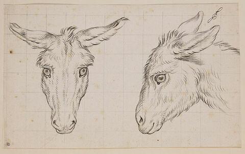 Deux têtes d'âne