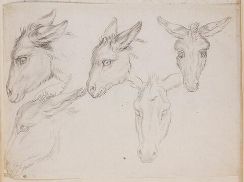 Cinq études de têtes d'âne
