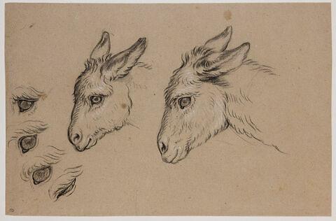 Deux têtes d'âne et quatre études d'oeil d'âne