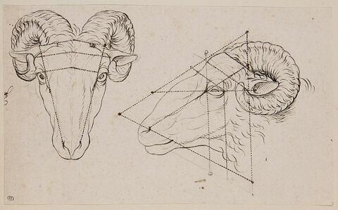Deux têtes de bélier