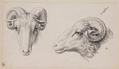 Deux têtes de béliers