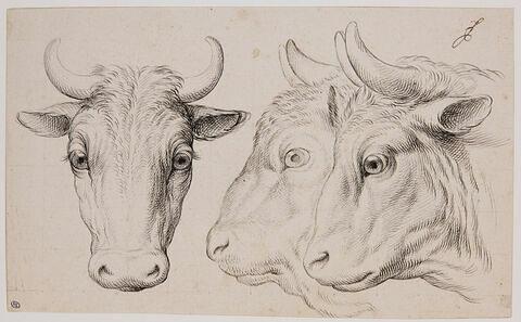 Deux têtes de boeufs et une tête de bison