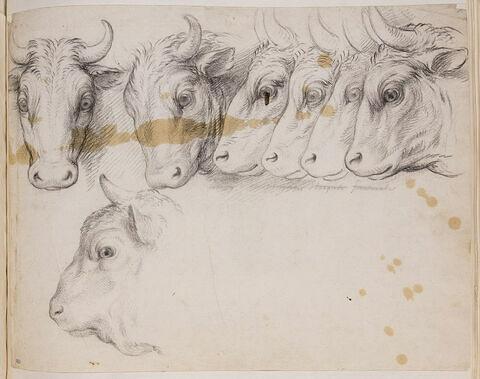Six études de têtes de boeufs et une étude de tête de bison