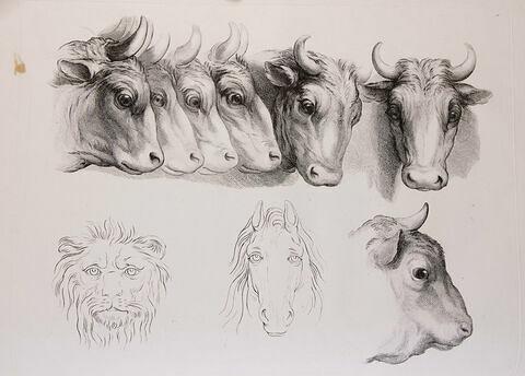 Têtes de boeufs, de lion et de cheval