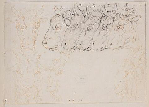 Etudes de têtes de boeuf, de bison et de boucs