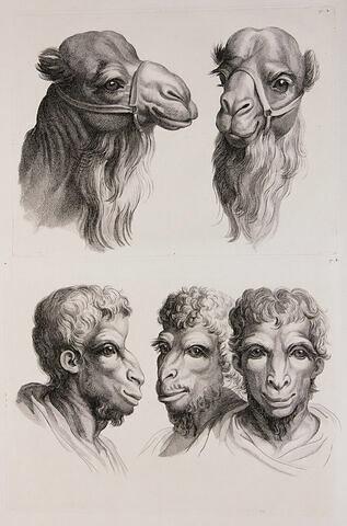 Deux têtes de chameaux et trois têtes d'hommes en relation avec le chameau.