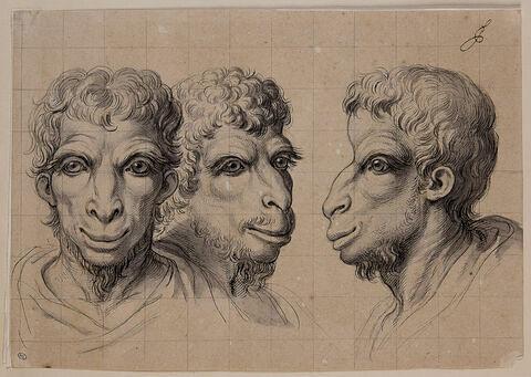 Trois têtes physiognomoniques inspirées par le chameau