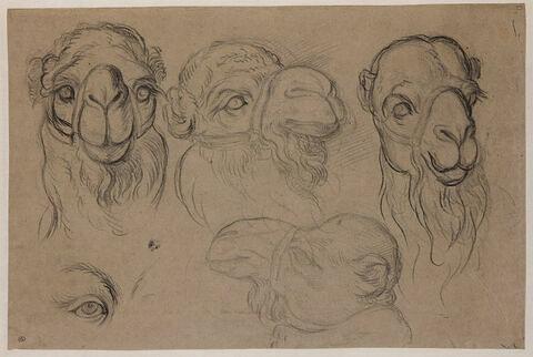 Quatre études de têtes de chameau et un oeil de chameau
