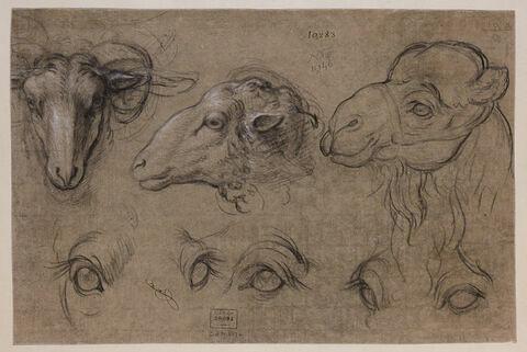 Etudes de deux têtes de brebis, une étude de tête de chameau et cinq...
