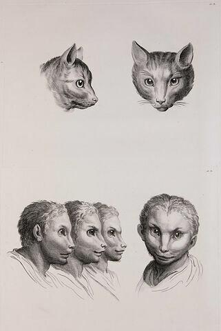Deux têtes de chat et quatre têtes d'hommes en relation avec le chat.
