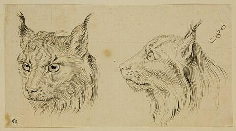 Deux têtes de loup-cervier