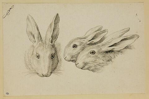 Deux têtes de lièvre et une tête de lapin