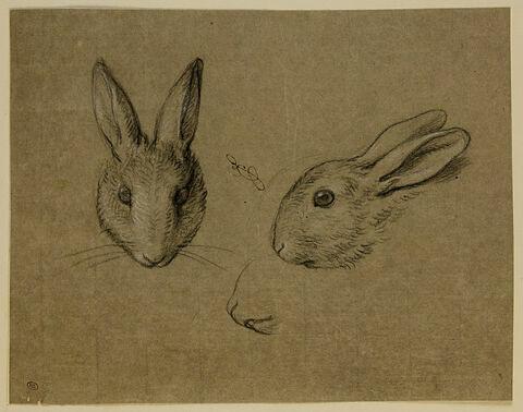 Deux têtes de lapin, l'une de face et l'autre de profil