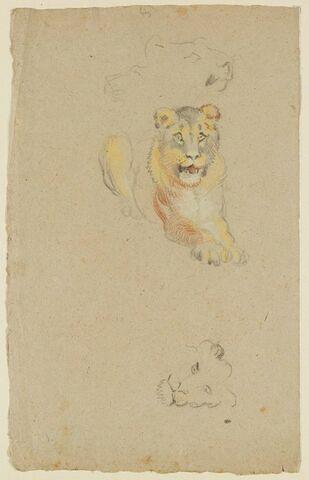 Un lion couché et deux têtes de lionne