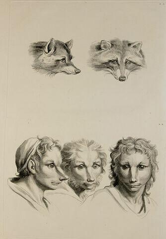 Deux têtes de renard. Trois têtes d'homme en relation avec le renard.