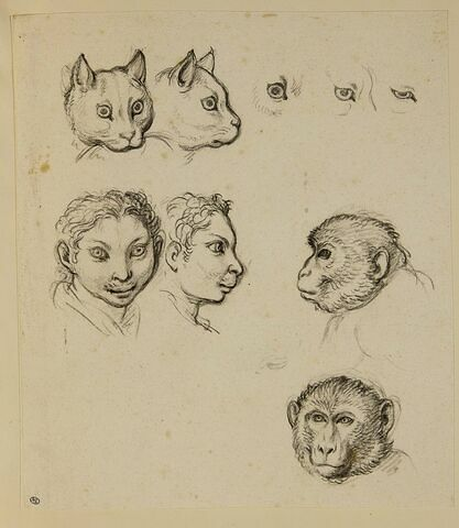 Deux têtes de singe, deux têtes de chat et deux têtes d'homme
