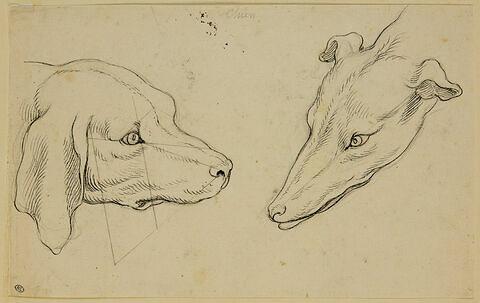 Deux têtes de chiens de races différentes, de profil