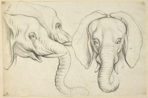 Trois têtes d'éléphant
