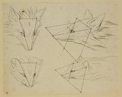 Deux études de tête de renard et deux études de tête de fouine