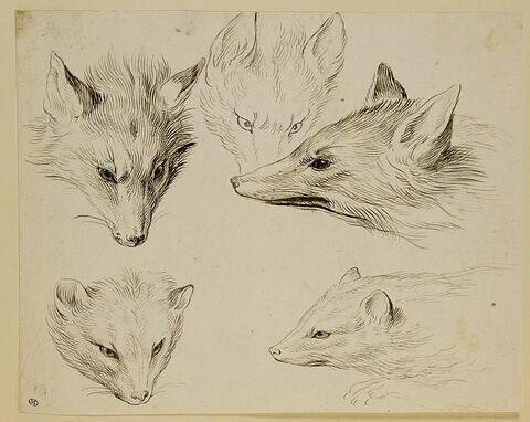 Trois études de têtes de renard et deux études de têtes de fouines