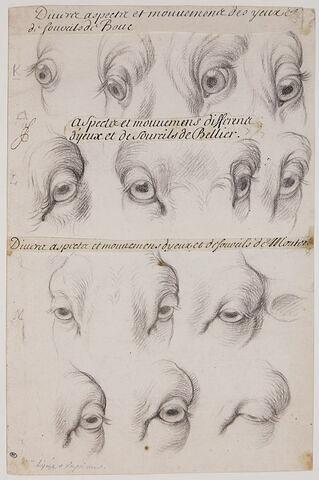 Etudes d'yeux et de sourcils du bouc, du bélier et du mouton