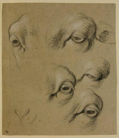 Etudes d'yeux de mouton