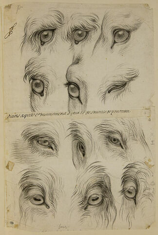 Etudes d'yeux de pourceau et de bouc