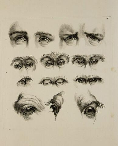 Divers aspects et mouvements d'yeux de chameaux, de singes et de l'homme