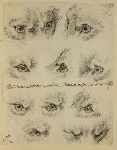 Etudes d'yeux de renard