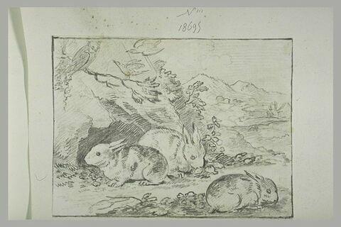 Trois lapins, un hibou et deux oiseaux dans un paysage