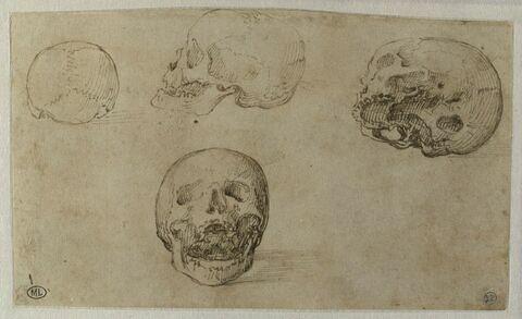 Quatre études d'un crâne