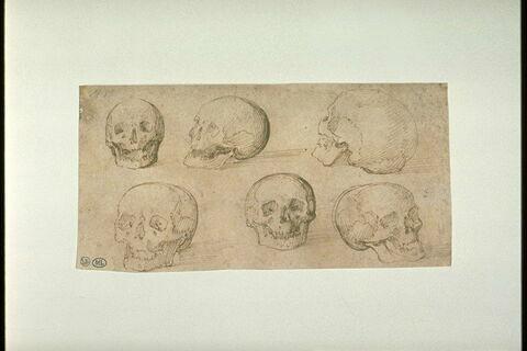 Six études d'un crâne