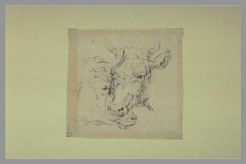 Deux têtes de vaches