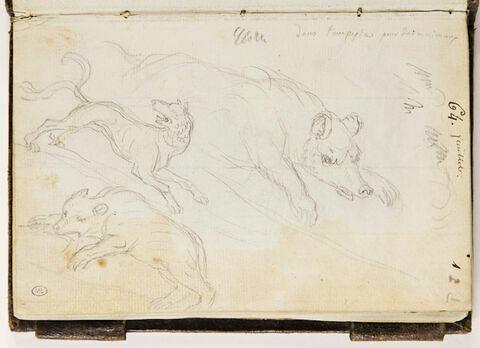 Etudes d'animaux : deux ours et un loup