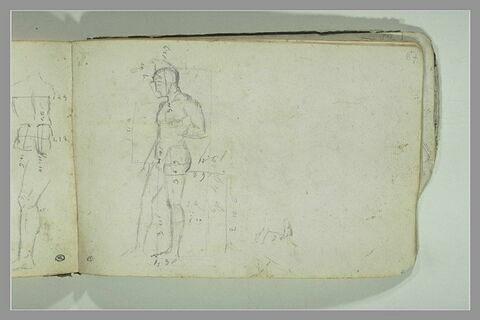 Etude des proportions d'une statue antique : Arès Borghèse