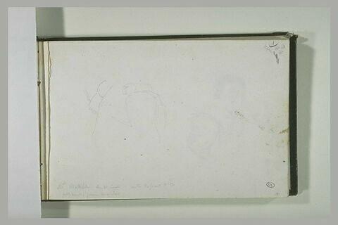 Etude de selle et du postérieur d'un équidé; annotation manuscrite