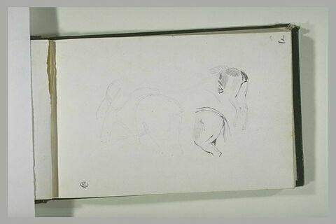 Etudes de selle et du postérieur d'un équidé