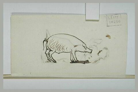 Etude d'un porc