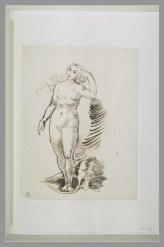Vénus dans sa coquille